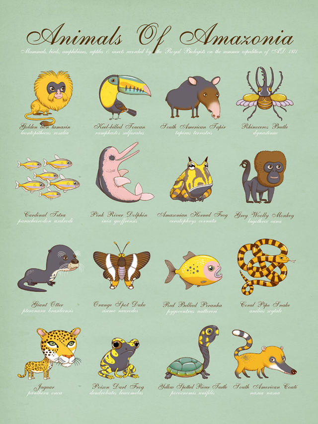 Animals Of Amazonia by Andy Ward