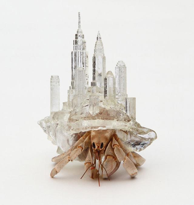 Hermit crab shells by Aki Inomata