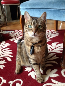 Cat Fitbit