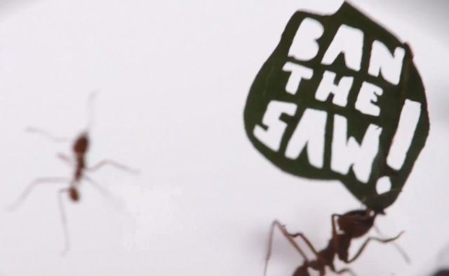 Ant Rally
