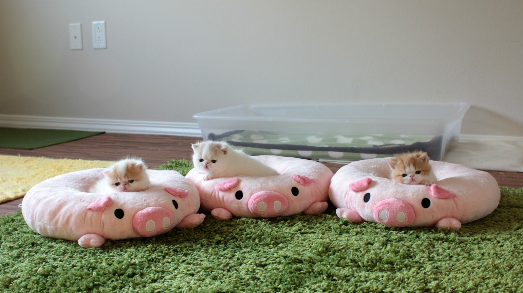 Three Little Kittens Sitting Pretty On Plush Pig Cushions