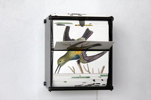ok1_flip-book-machine-ornithology