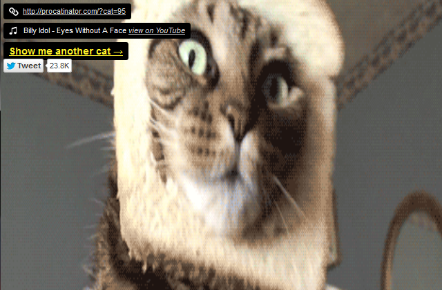 ... Website That Pairs Funny Cat GIFs With Appropriate Songs
