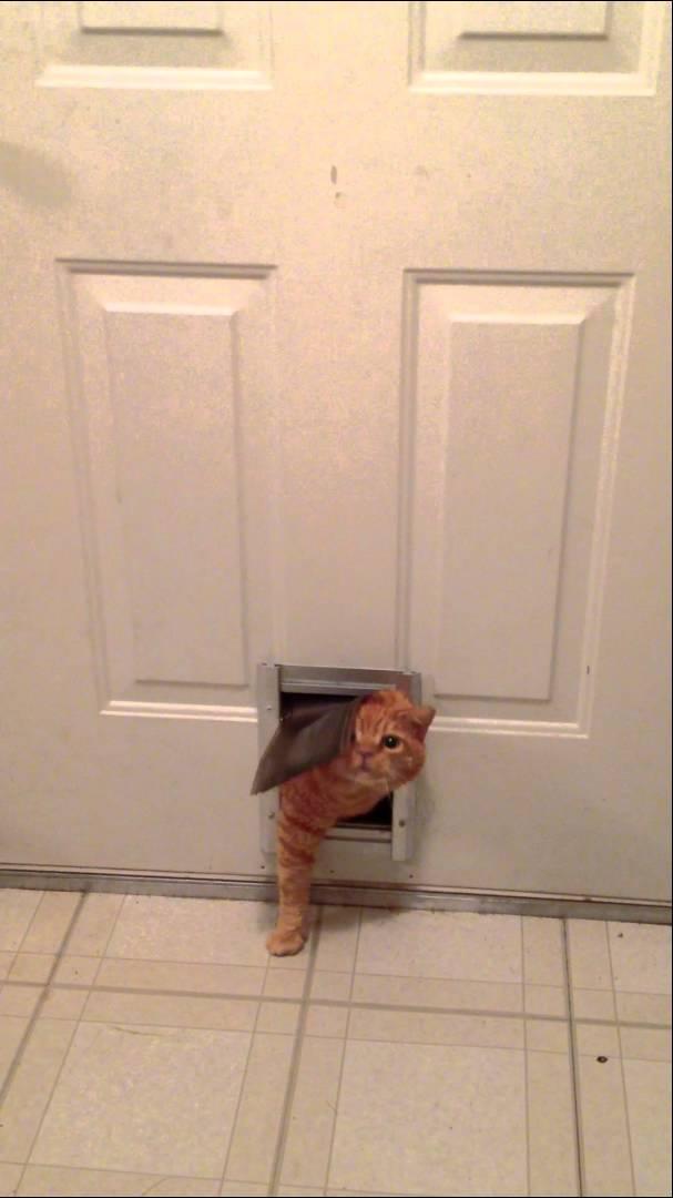 Fat Cat Through Pet Door Meme