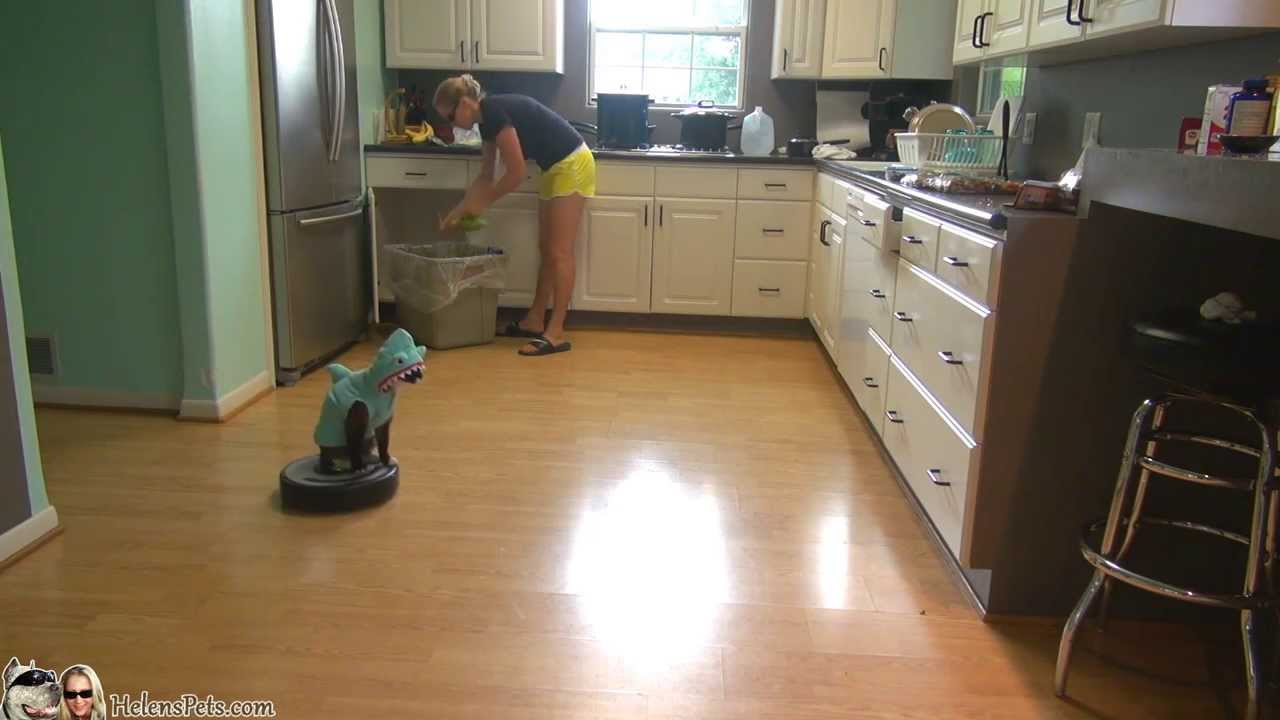 Cat Wearing a Shark Costume Rides a Roomba Vacuum Round and Round a Kitchen