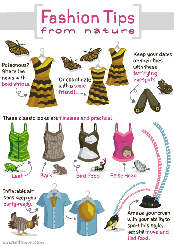 Fashion Tips From Caterpillars Butterflies Birds And Other Animals