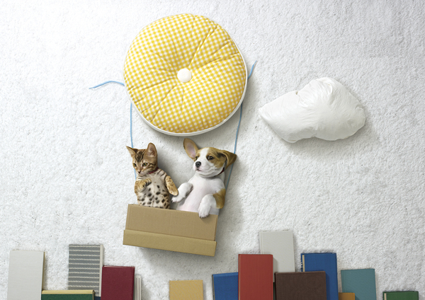A Puppy & A Kitten Have Safe Adventures With Ordinary Household Items in Photo Series
