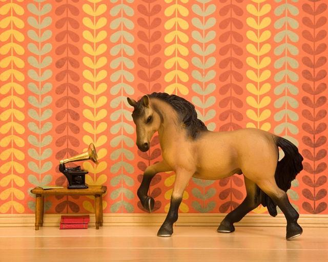 Gallop, Canter, Foxtrot