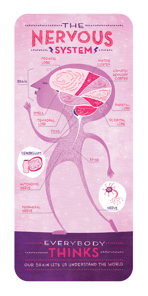 Body Systems, Cute Illustrations That Identify Different Parts of ...