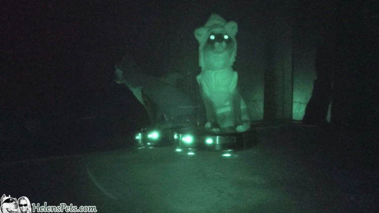 Nighttime Footage Of A Cat In A Shark Costume Riding A Roomba