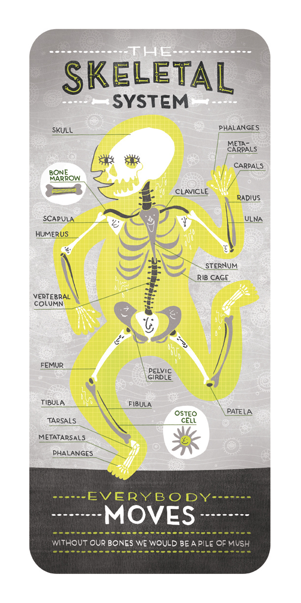 skeletal system  by rachel ignotofsky