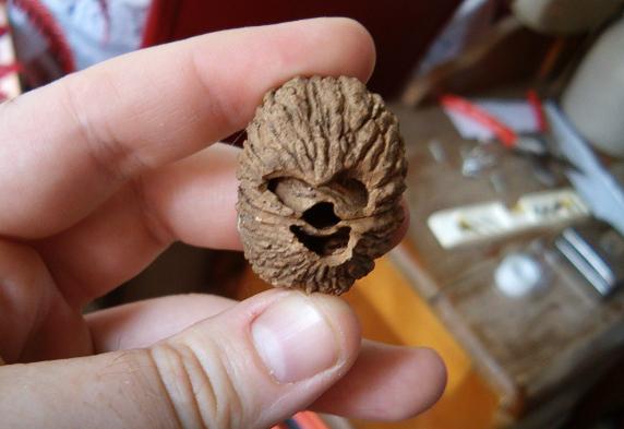 Chewie walnut