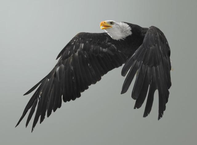 Bird of prey photos by Martin Klimas