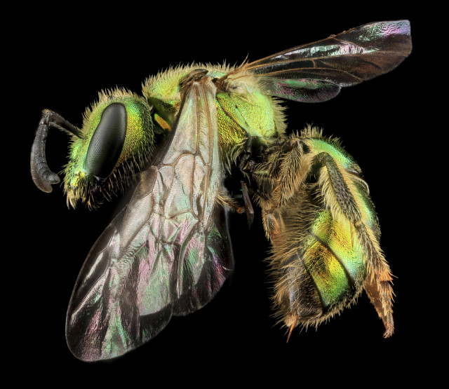 Macro photos of Insects by USGS