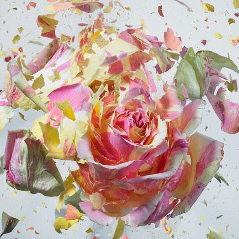 Rapid Bloom by Martin Klimas