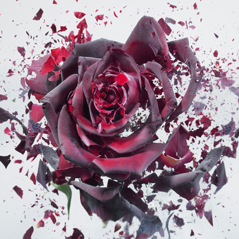 Rapid Bloom, Photos of Shattering Flowers