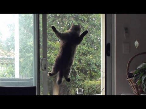 how to get cat to use cat door