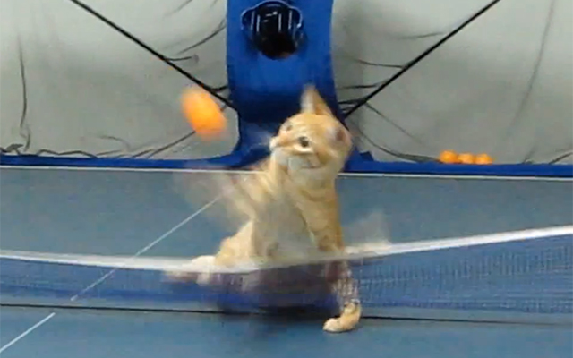 A Cat Playing Ping Pong