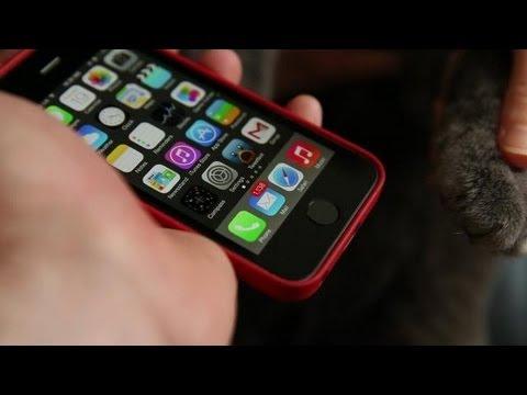 A Cat Unlocks an iPhone 5s Using the Built-In Fingerprint Sensor
