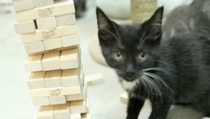 Kitten Jenga