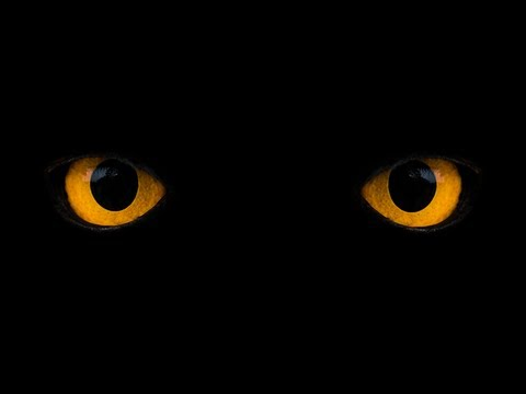What Do We See in The Dark? by Vsauce3