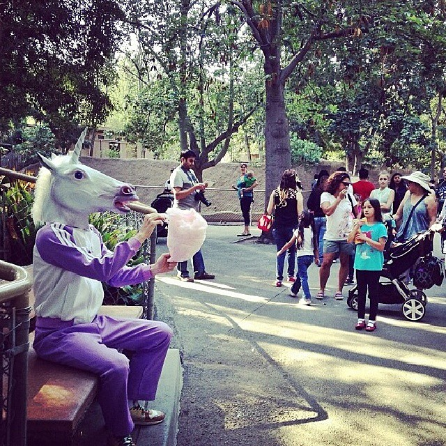 Unicorn at the Zoo