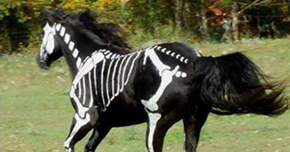 Skeleton Horse, Artist Paints White Bones on Her Black Horse