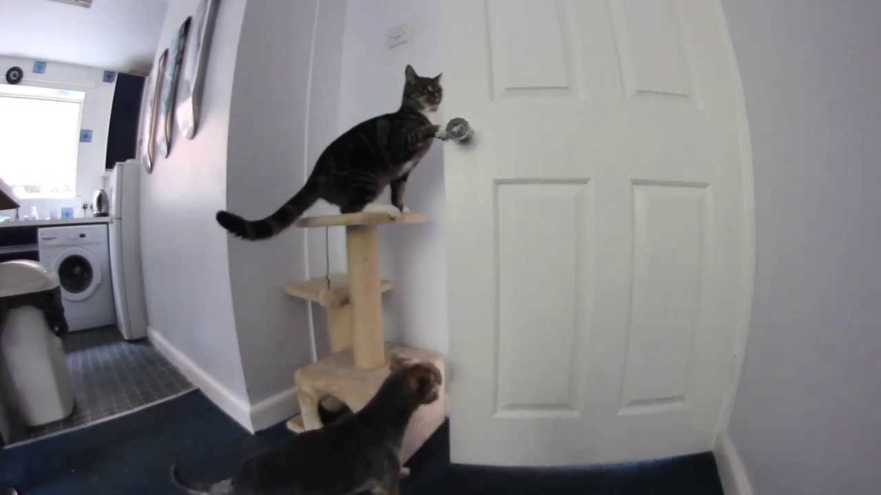 Cat Cleverly Uses Both Paws To Turn A Doorknob-9256