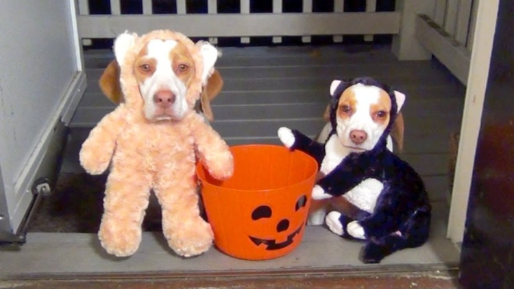 Small Puppy Halloween Costumes
