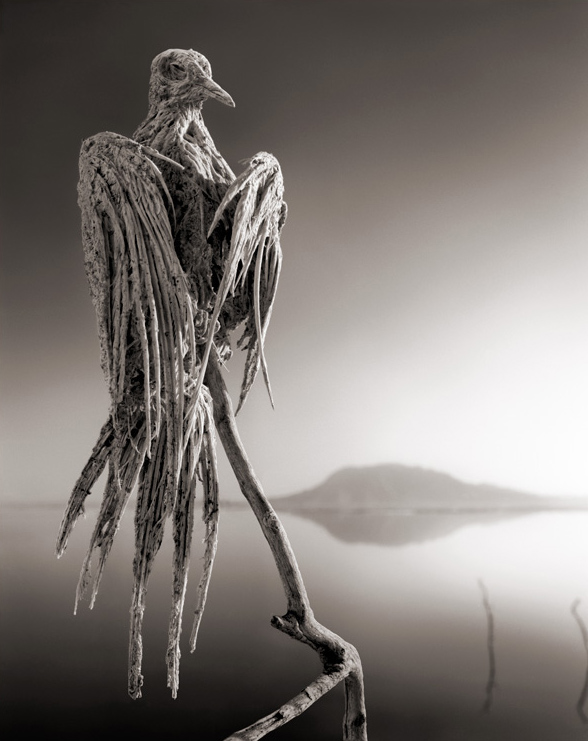 Animal statue photos by Nick Brandt