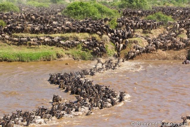 Photos of animals congregating