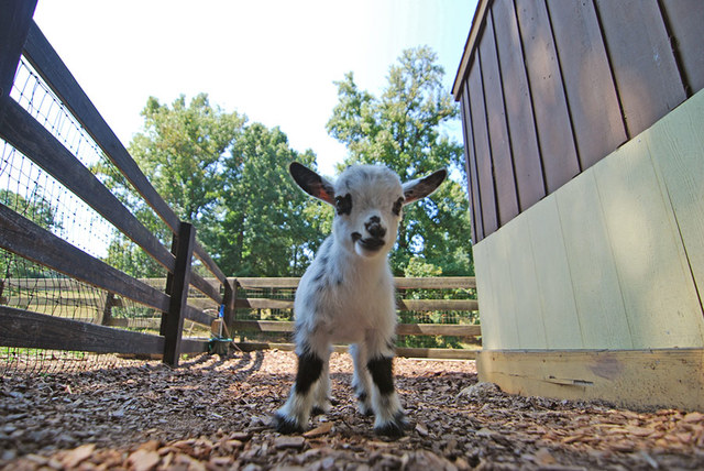 Tanglewood Farm, A Farm Dedicated to Miniature Animals