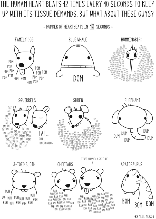 A Comic Illustrating the Heartbeats of Animals Over Ten Seconds