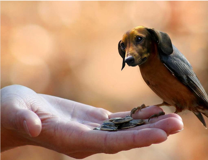 Dirds, Images of Birds With Dog Heads