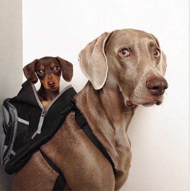 Harlow and Indi Backpack