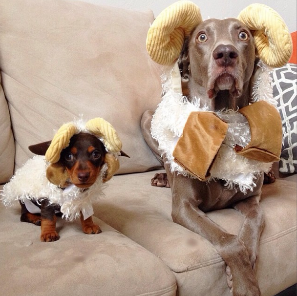 Harlow and Indi Halloween