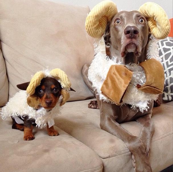 Harlow and Indi Halloween