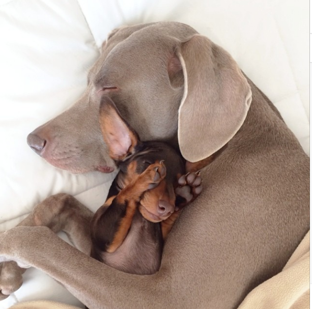 Harlow and Indi Hug