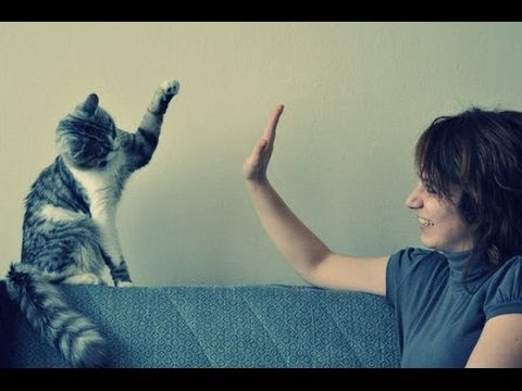A Compilation Video of Cats Giving High Fives