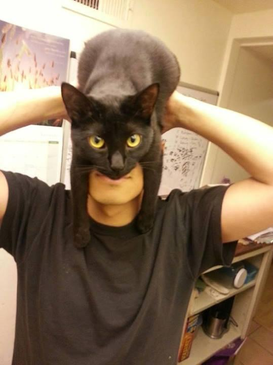How To Transform Into Batman Using a Black Cat