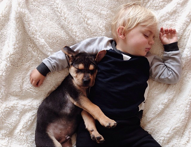 Toddler Napping With Puppy