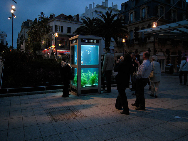 Phone Booth Fish Aquariums
