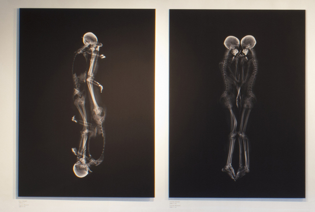 X-Ray Portraits