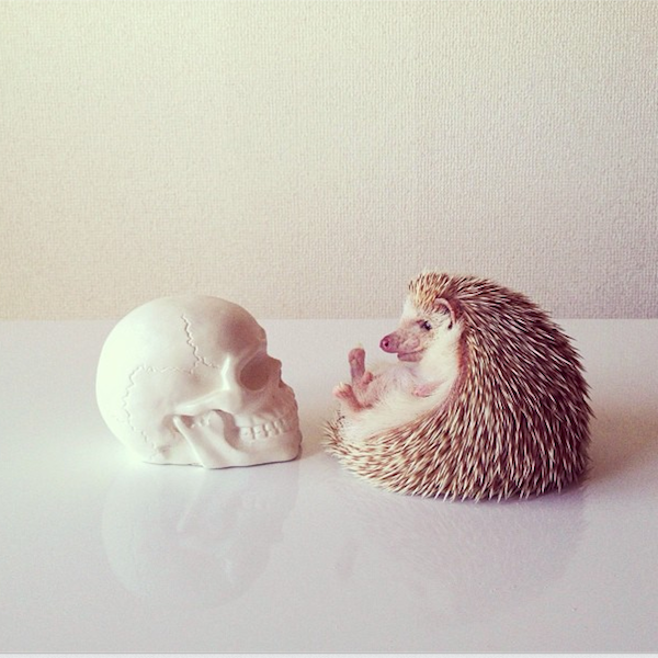 Darcy the Flying Hedgehog and Skull