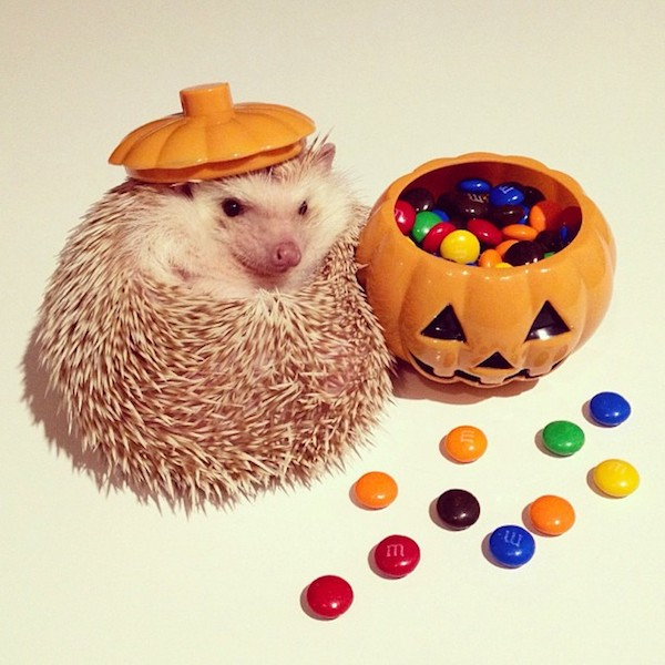 Darcy the Hedgehog Pumpkin
