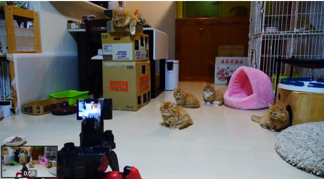 Munchin Kittens and Spider Robot