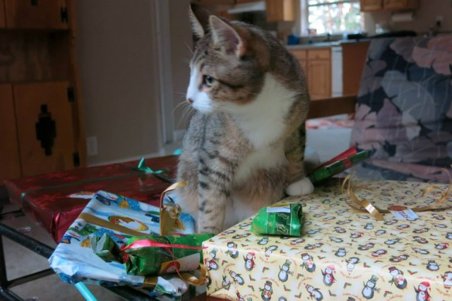 Quirky the Blind Kitten's Xmas