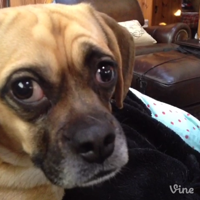 Jaxon the Dog Is Surprised After Being Told He Is a Dog