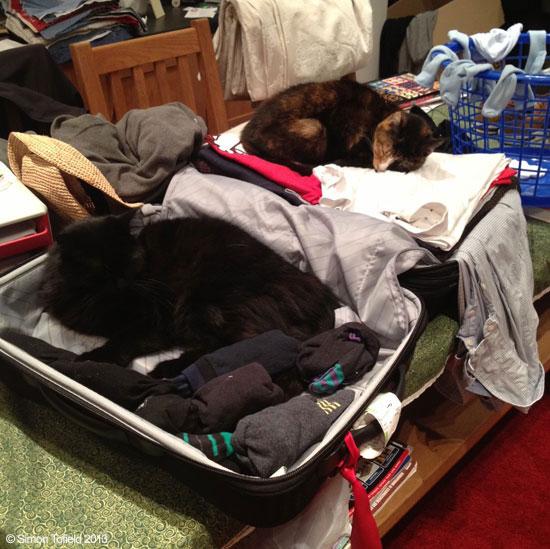Simon Tofields Cats Teddy & Jess