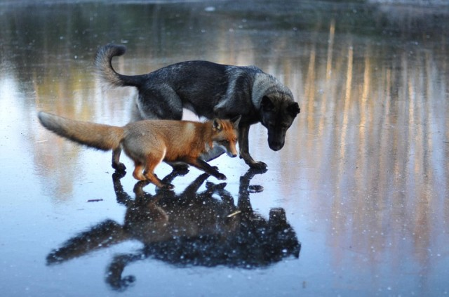 Sniffer and Tinni on Frozen Pond